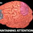 Your Brain on Action Video Games